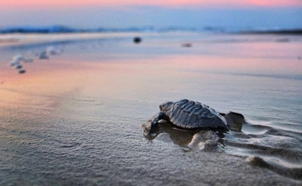 TURTLE RELEASE TODAY AT 5:15PM